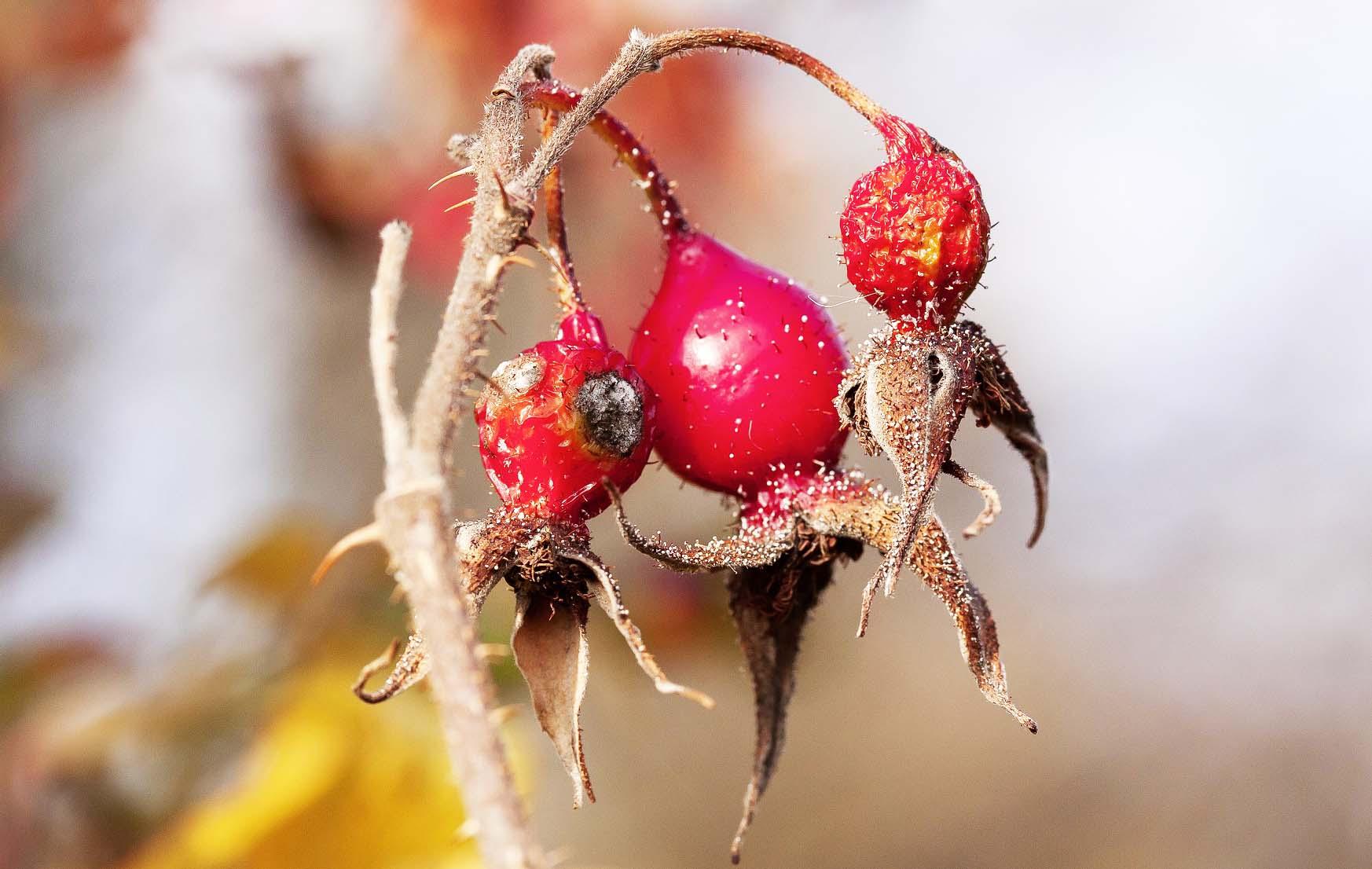 Delavnica Divje rastline in cvetje