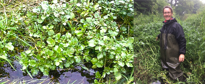 Vodna kreša in Katja v potoku z vodno krešo