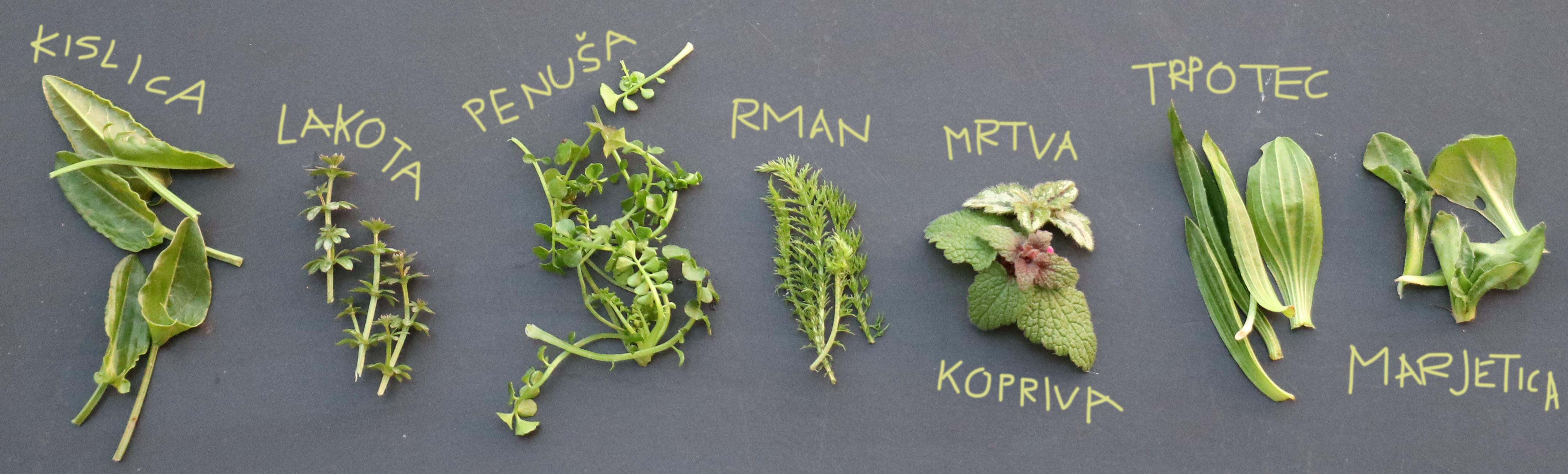 Divje rastline za solato