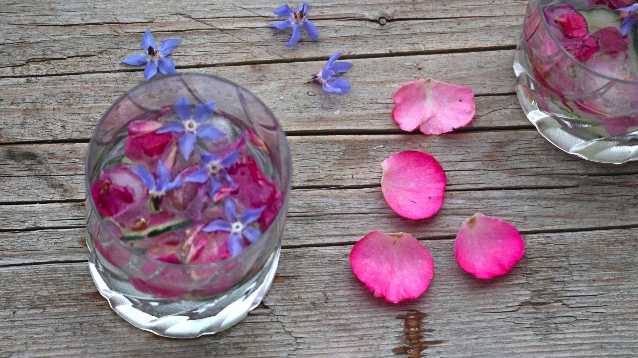 Boreč je zdravilna rastlina, okusna in lahko jo je vzgojiti na vrtu