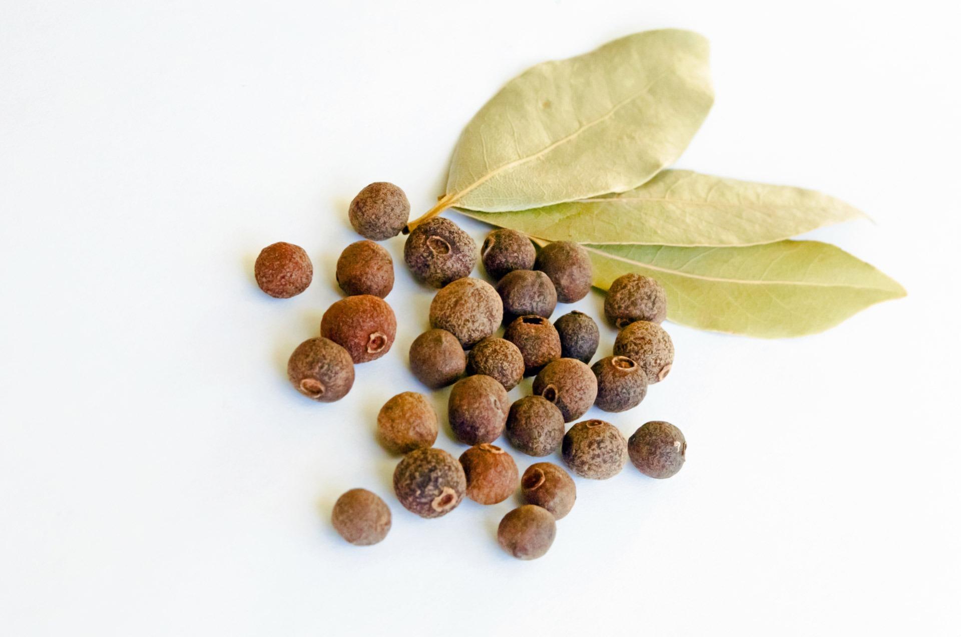 Lovor za sirup, čaj, začimbo in olje